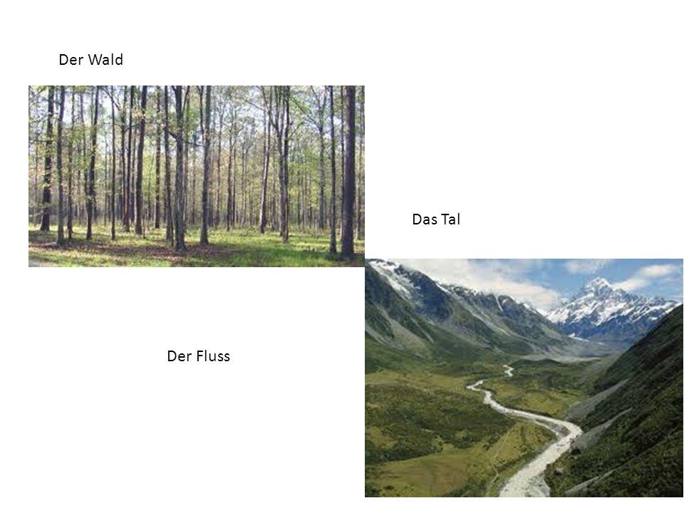 Der Wald Das Tal Der Fluss