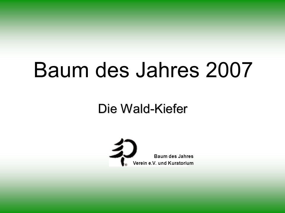 Die Wald-Kiefer Baum des Jahres 2007 Baum des Jahres Verein e.V. und Kuratorium