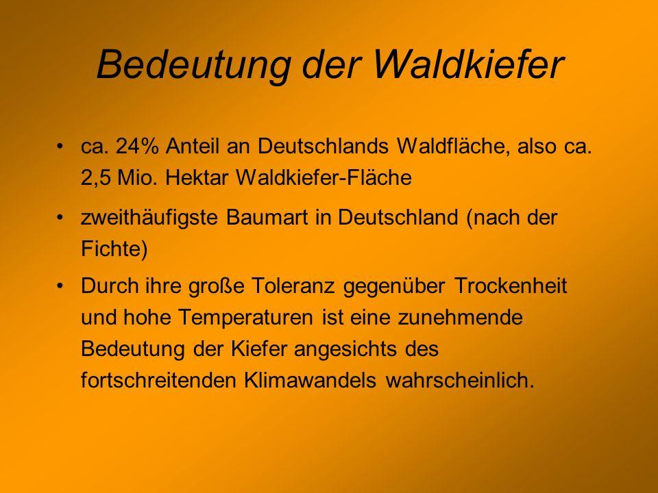 Bedeutung der Waldkiefer ca. 24% Anteil an Deutschlands Waldfläche, also ca. 2,5 Mio. Hektar Waldkiefer-Fläche zweithäufigste Baumart in Deutschland (