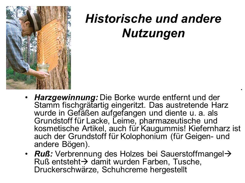 Historische und andere Nutzungen. Harzgewinnung: Die Borke wurde entfernt und der Stamm fischgrätartig eingeritzt. Das austretende Harz wurde in Gefäß