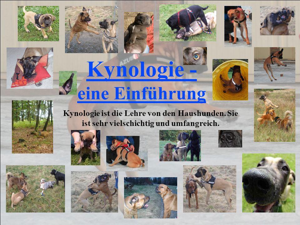 Kynologie - eine Einführung Kynologie ist die Lehre von den Haushunden. Sie ist sehr vielschichtig und umfangreich.