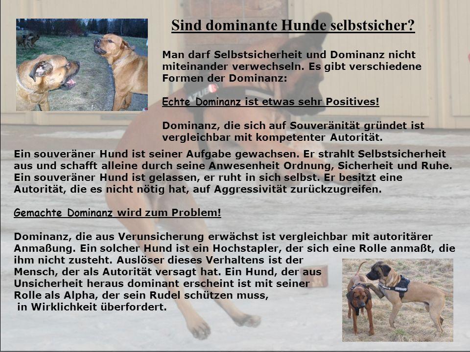 Sind dominante Hunde selbstsicher? Man darf Selbstsicherheit und Dominanz nicht miteinander verwechseln. Es gibt verschiedene Formen der Dominanz: Ech