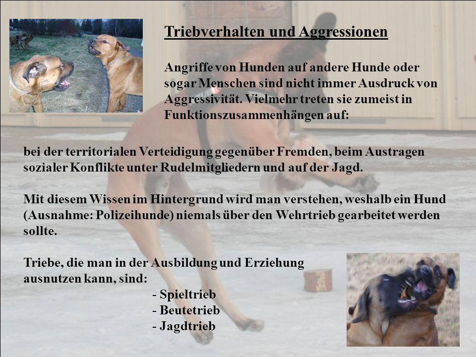 Triebverhalten und Aggressionen Angriffe von Hunden auf andere Hunde oder sogar Menschen sind nicht immer Ausdruck von Aggressivität. Vielmehr treten
