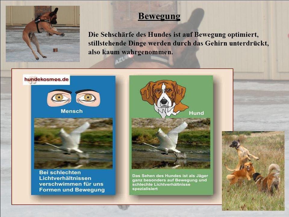 Bewegung Die Sehschärfe des Hundes ist auf Bewegung optimiert, stillstehende Dinge werden durch das Gehirn unterdrückt, also kaum wahrgenommen.