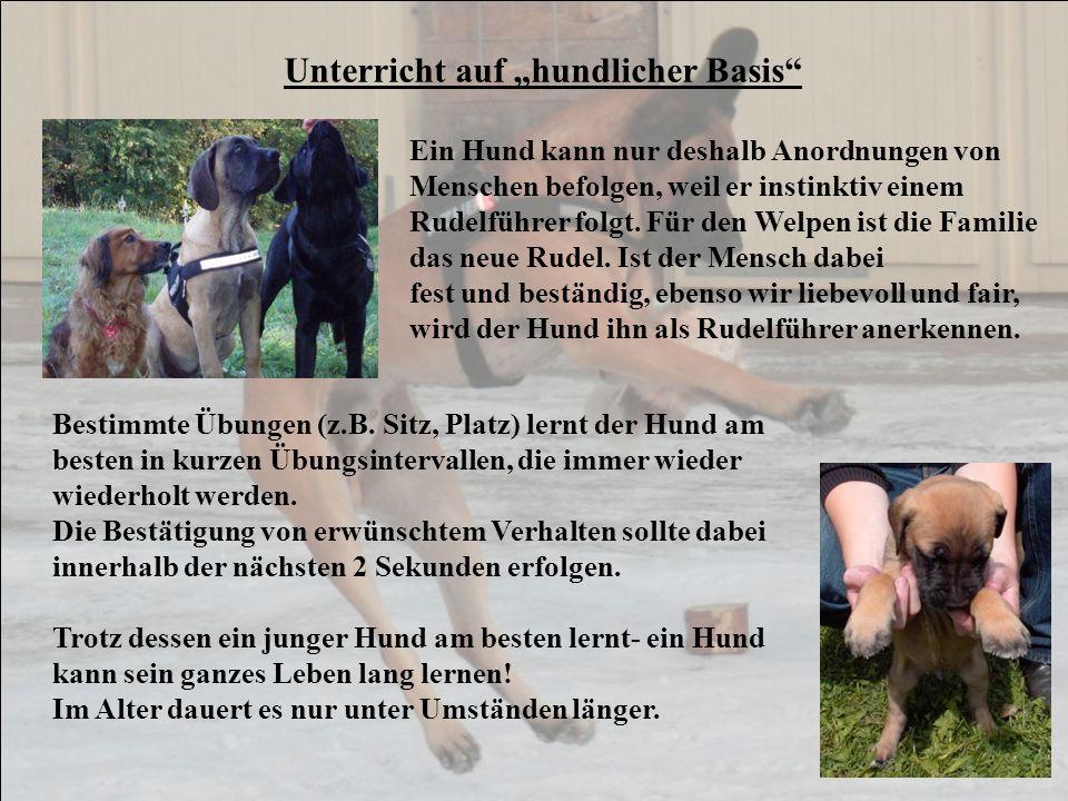 Unterricht auf hundlicher Basis Ein Hund kann nur deshalb Anordnungen von Menschen befolgen, weil er instinktiv einem Rudelführer folgt. Für den Welpe