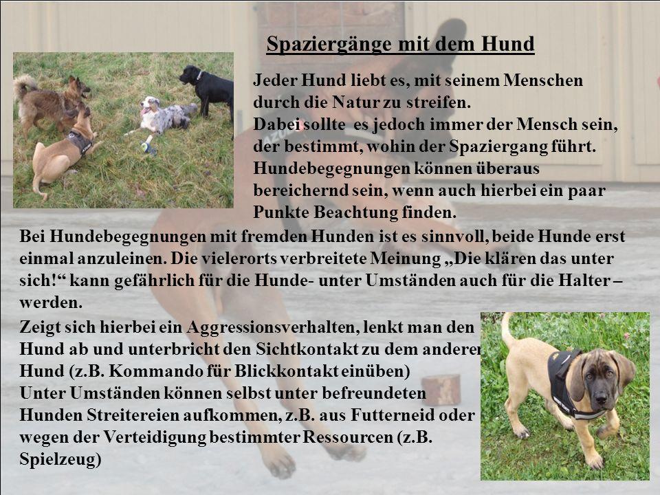 Jagdverhalten des Hundes Viele Hunde zeigen (ein für uns) unerwünschtes Jagdverhalten.
