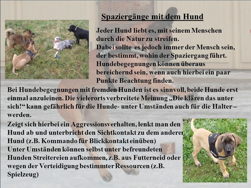 Der Körperbau des Hundes Der Körperbau des Hundes entspricht dem eines erfolgreichen Jägers.