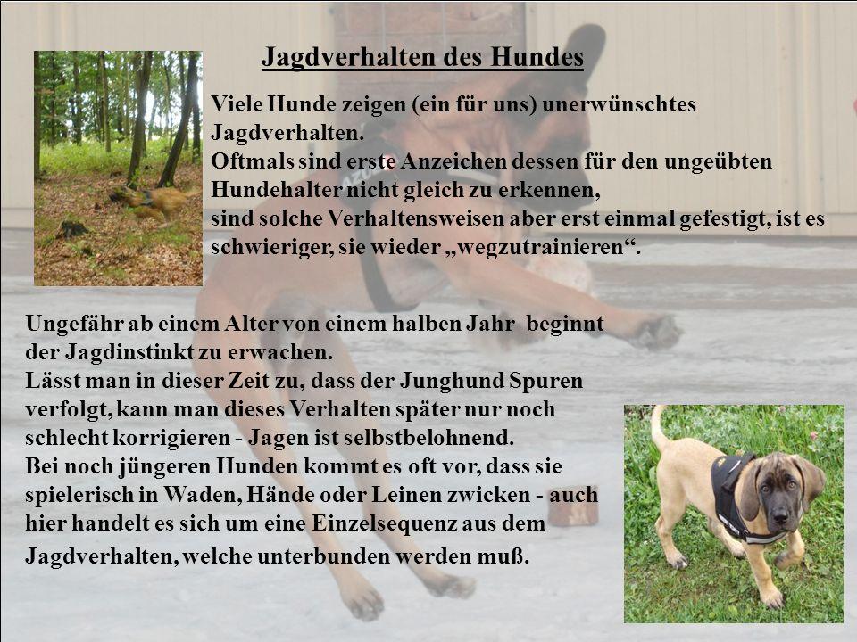 Jagdverhalten des Hundes Viele Hunde zeigen (ein für uns) unerwünschtes Jagdverhalten. Oftmals sind erste Anzeichen dessen für den ungeübten Hundehalt