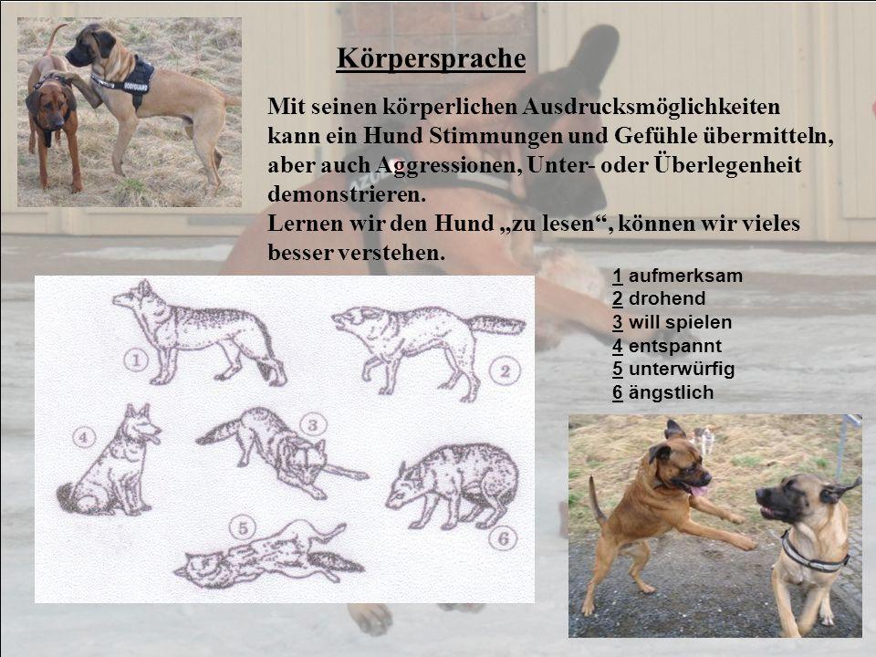 Körpersprache 1 aufmerksam 2 drohend 3 will spielen 4 entspannt 5 unterwürfig 6 ängstlich Mit seinen körperlichen Ausdrucksmöglichkeiten kann ein Hund