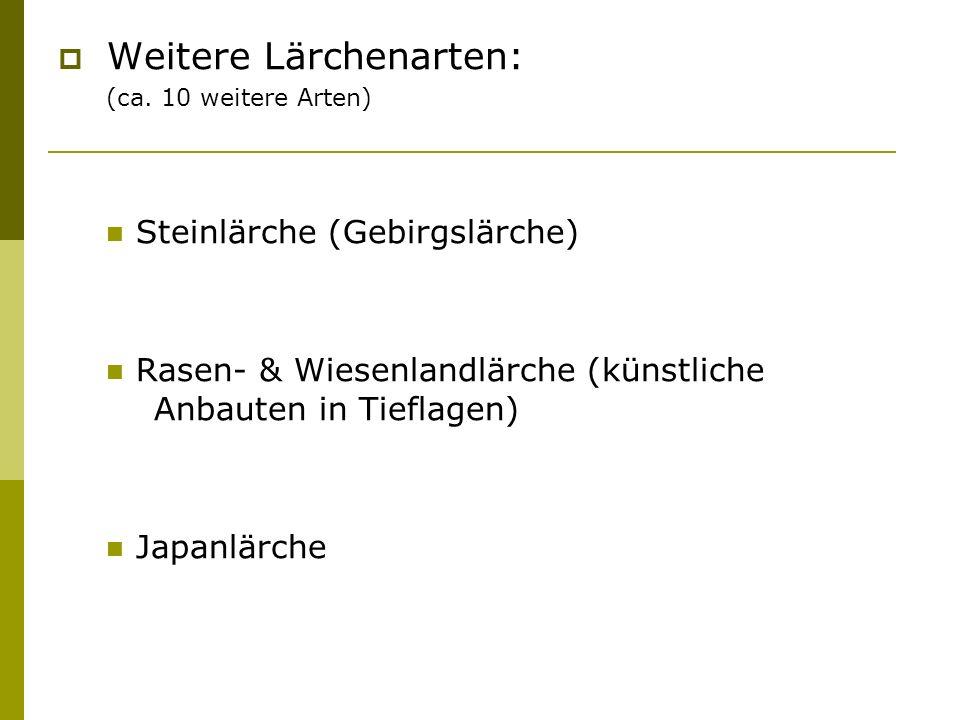 Weitere Lärchenarten: (ca. 10 weitere Arten) Steinlärche (Gebirgslärche) Rasen- & Wiesenlandlärche (künstliche Anbauten in Tieflagen) Japanlärche