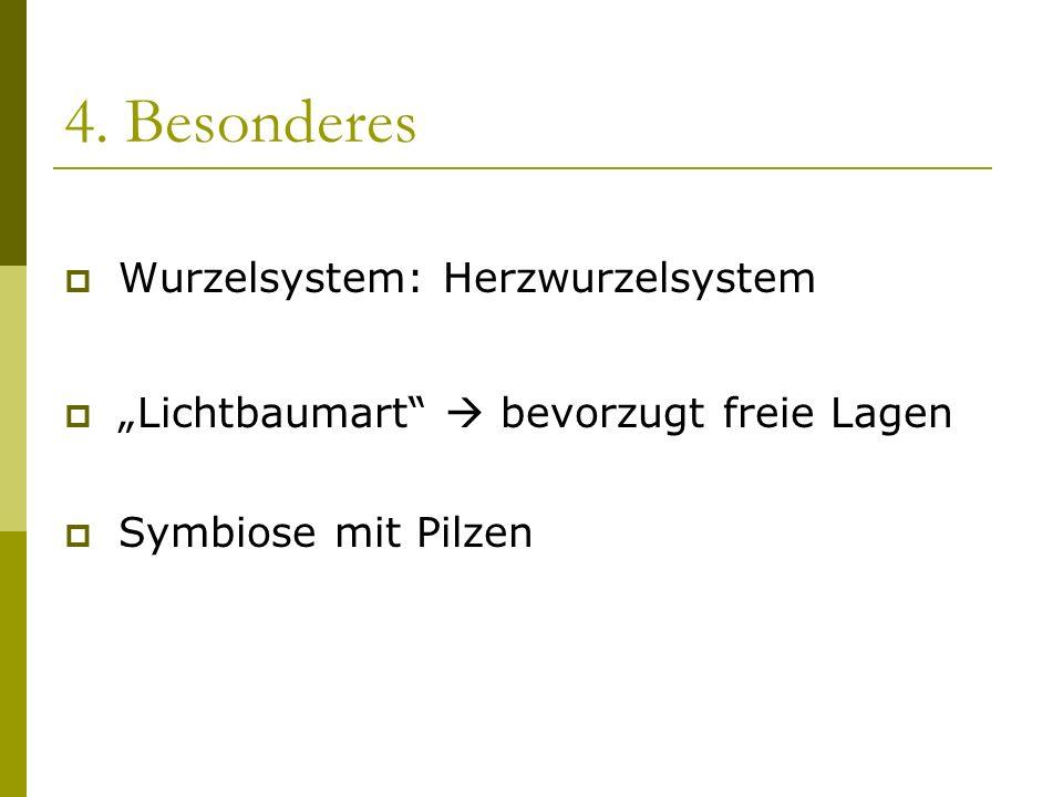 4. Besonderes Wurzelsystem: Herzwurzelsystem Lichtbaumart bevorzugt freie Lagen Symbiose mit Pilzen