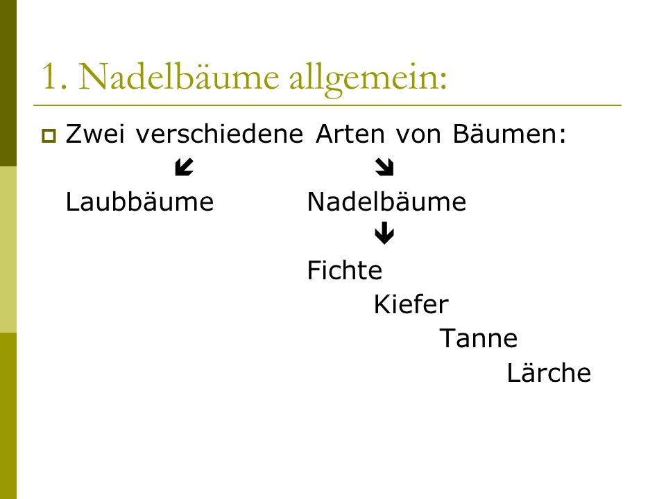 1. Nadelbäume allgemein: Zwei verschiedene Arten von Bäumen: LaubbäumeNadelbäume Fichte Kiefer Tanne Lärche