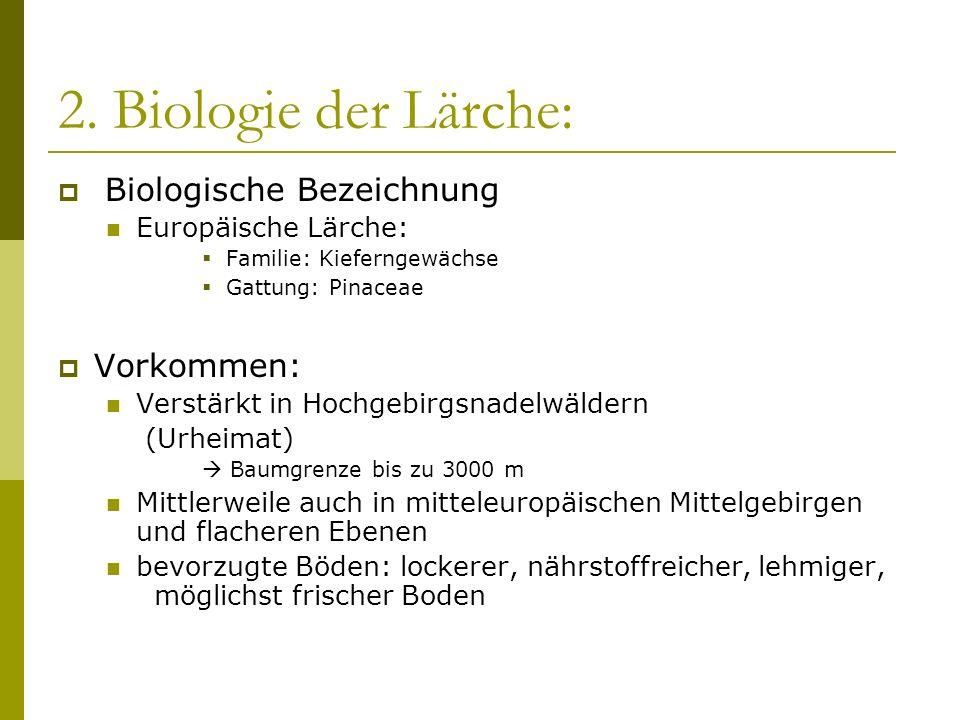 2. Biologie der Lärche: Biologische Bezeichnung Europäische Lärche: Familie: Kieferngewächse Gattung: Pinaceae Vorkommen: Verstärkt in Hochgebirgsnade