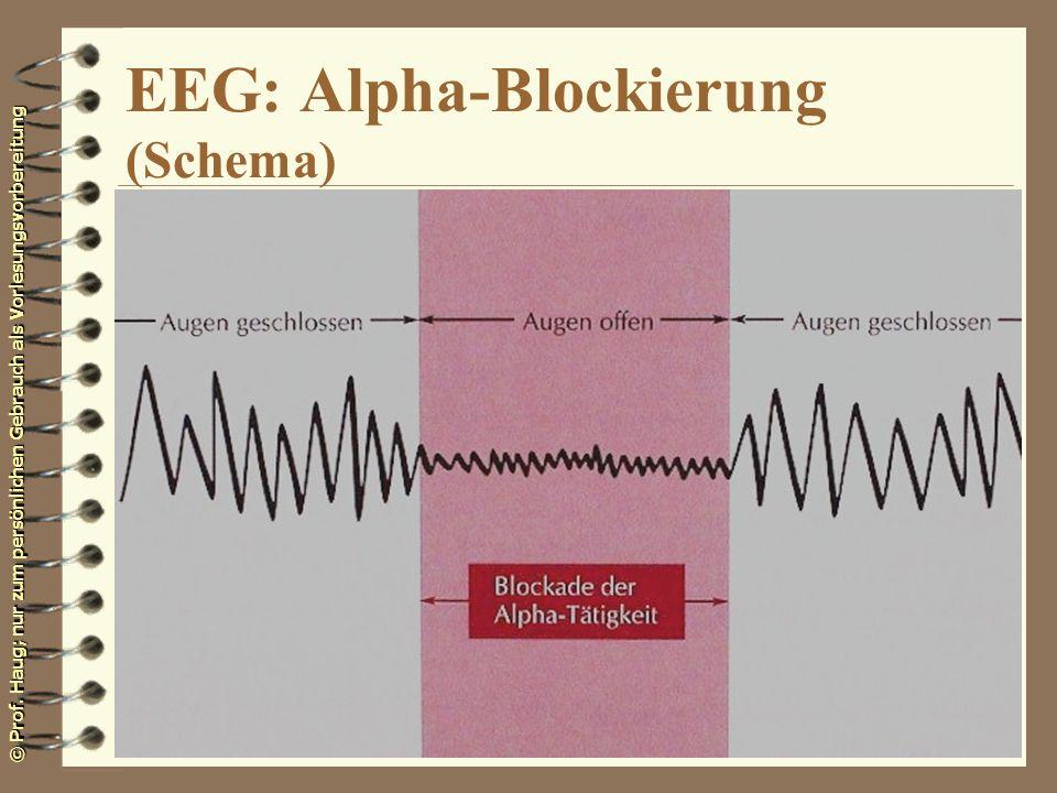 © Prof. Haug; nur zum persönlichen Gebrauch als Vorlesungsvorbereitung EEG: Alpha-Blockierung (Schema)