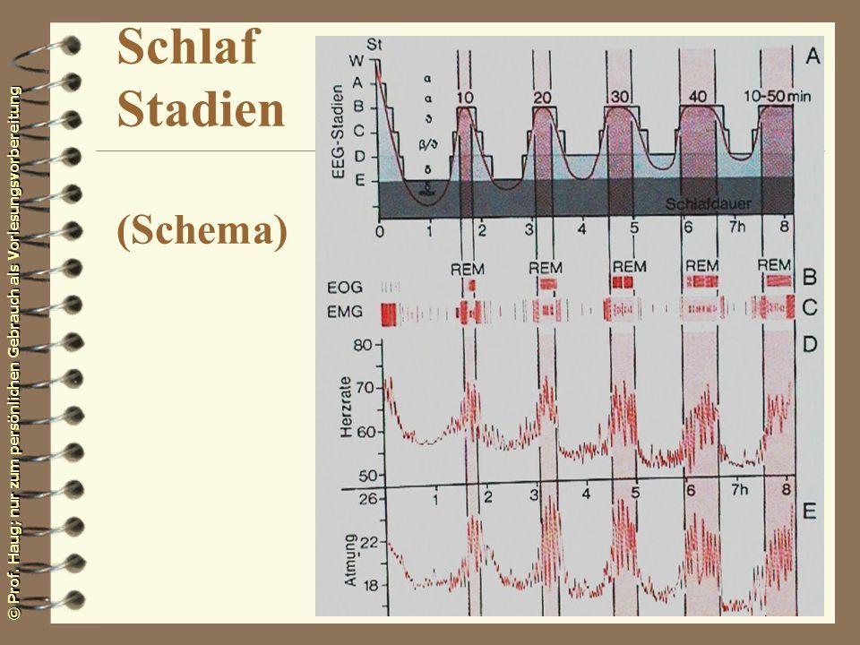 © Prof. Haug; nur zum persönlichen Gebrauch als Vorlesungsvorbereitung Schlaf Stadien (Schema)