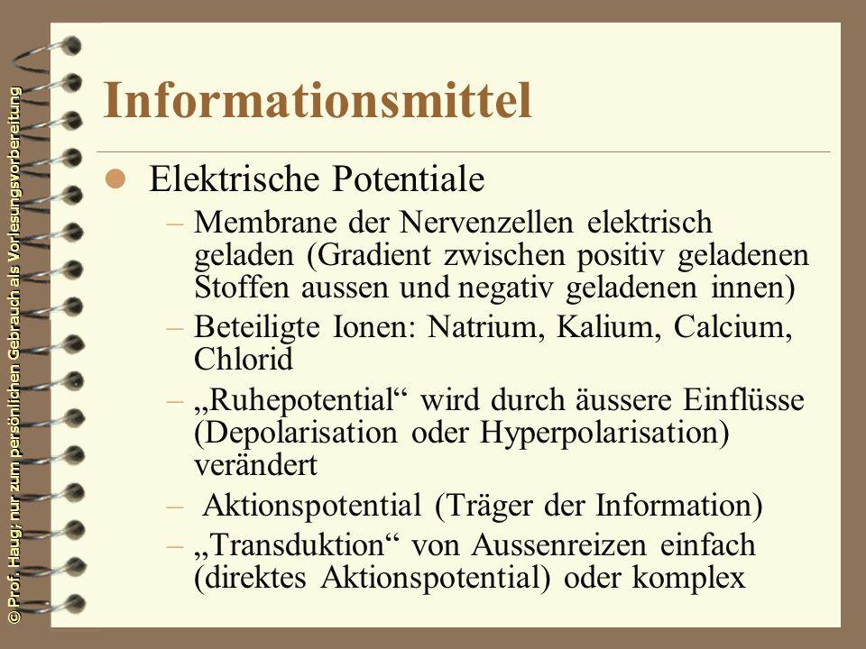 © Prof. Haug; nur zum persönlichen Gebrauch als Vorlesungsvorbereitung Informationsmittel l Elektrische Potentiale –Membrane der Nervenzellen elektris
