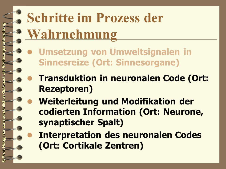 © Prof. Haug; nur zum persönlichen Gebrauch als Vorlesungsvorbereitung Schritte im Prozess der Wahrnehmung l Umsetzung von Umweltsignalen in Sinnesrei