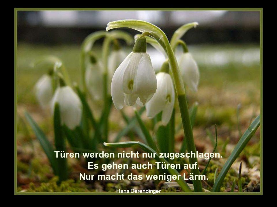 Weicher ist stärker als hart, Wasser stärker als Fels, Liebe stärker als Gewalt. Hermann Hesse