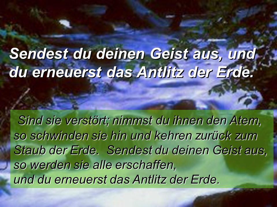 Sendest du deinen Geist aus, und du erneuerst das Antlitz der Erde. Sendest du deinen Geist aus, und du erneuerst das Antlitz der Erde. Sind sie verst