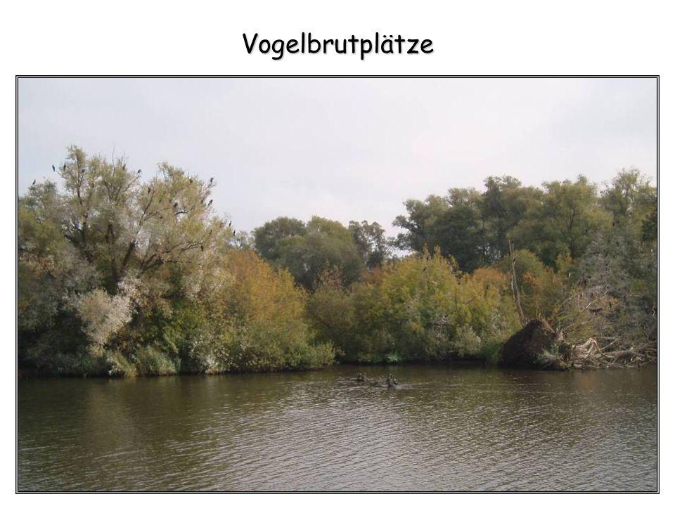 Vogelbrutplätze