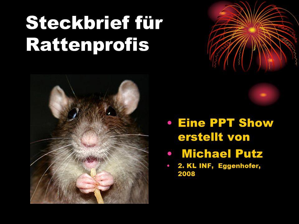 Steckbrief für Rattenprofis Eine PPT Show erstellt von Michael Putz 2. KL INF, Eggenhofer, 2008