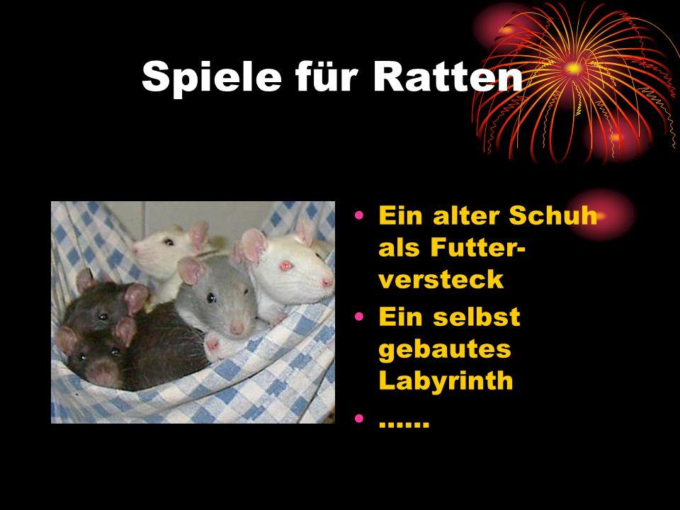 Spiele für Ratten Ein alter Schuh als Futter- versteck Ein selbst gebautes Labyrinth ……
