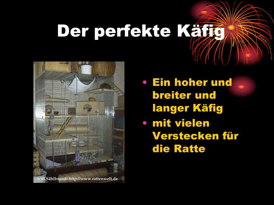 Der perfekte Käfig Ein hoher und breiter und langer Käfig mit vielen Verstecken für die Ratte