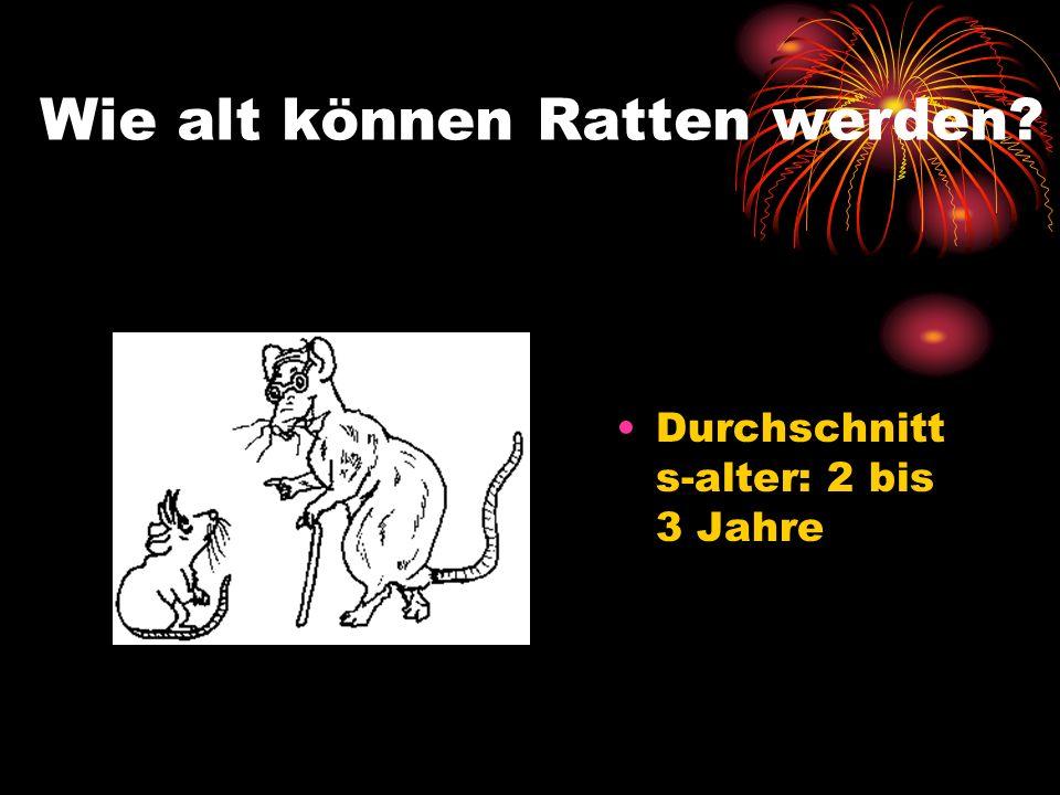 Wie alt können Ratten werden? Durchschnitt s-alter: 2 bis 3 Jahre