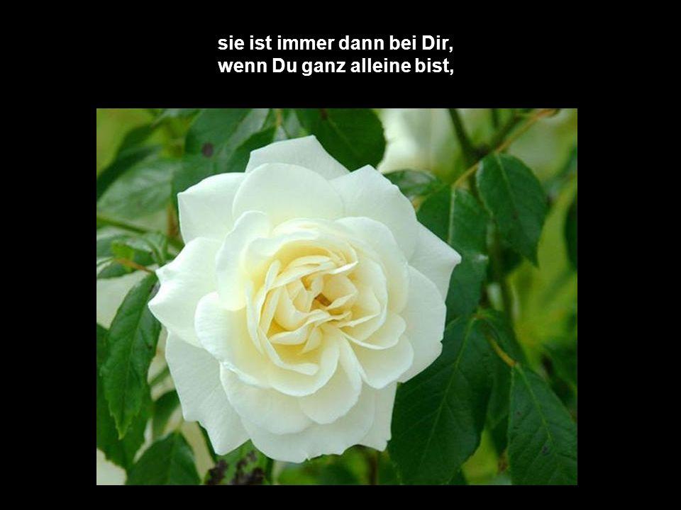 Die zweite Rose - glaube mir,
