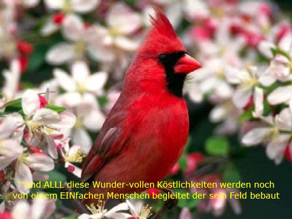 6° WIR hören CDs - SIE hören die Konzerte der Vögel GrasHüpfer & anderen Tieren - die Musik der Natur°°° °°° °°°