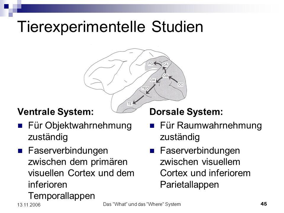 Das What und das Where System46 13.11.2006 Tierexperimentelle Studien Die ventrale Verarbeitungsbahn V1: nur Neurone mit kleinen rezeptiven Feldern und lokalen Filterfunktionen V2: diese Neurone können auch auf virtuelle bzw.