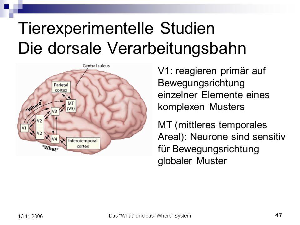 Das What und das Where System48 13.11.2006 MST (mediales superiores Areal): diese Neuronen reagieren spezifisch auf Rotation oder Vergrößerung/Verkleinerung eines jeden Objekts mit Tiefenbewegung.