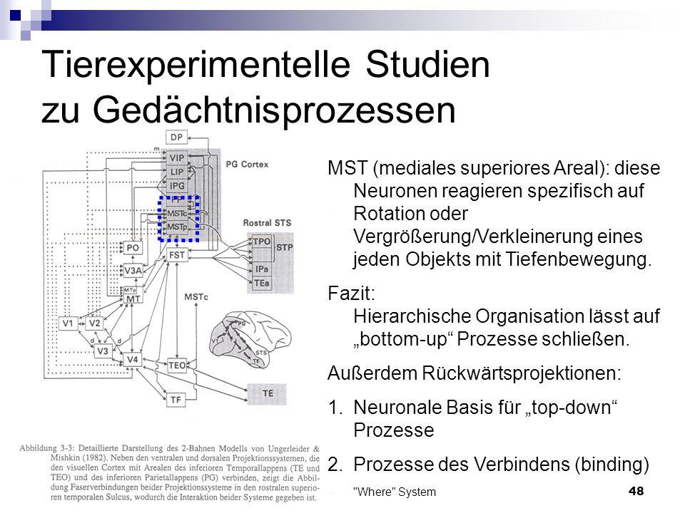 Das What und das Where System49 13.11.2006 Tierexperimentelle Studien zu Gedächtnisprozessen Beide Systeme haben eine Verbindung zum rostralen superioren temporalen Sulcus.