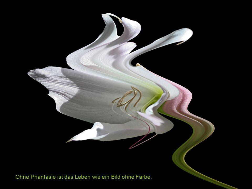 Musik: Morgenstimmung, Peer Gynt Suite I, Op. 46 No. 1 Fotos: © Nadine Wolfgang www.kreativ-atelier-muttenz nadine.wolfgang@gmx.ch Fantasia