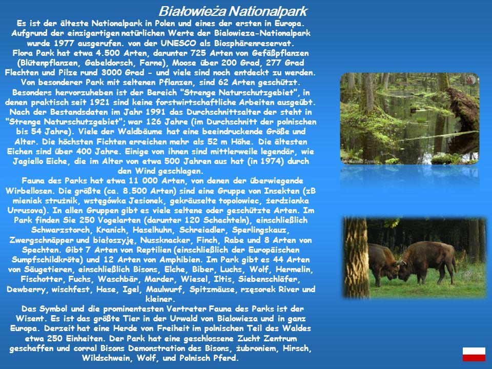 Es ist der älteste Nationalpark in Polen und eines der ersten in Europa. Aufgrund der einzigartigen natürlichen Werte der Bialowieza-Nationalpark wurd