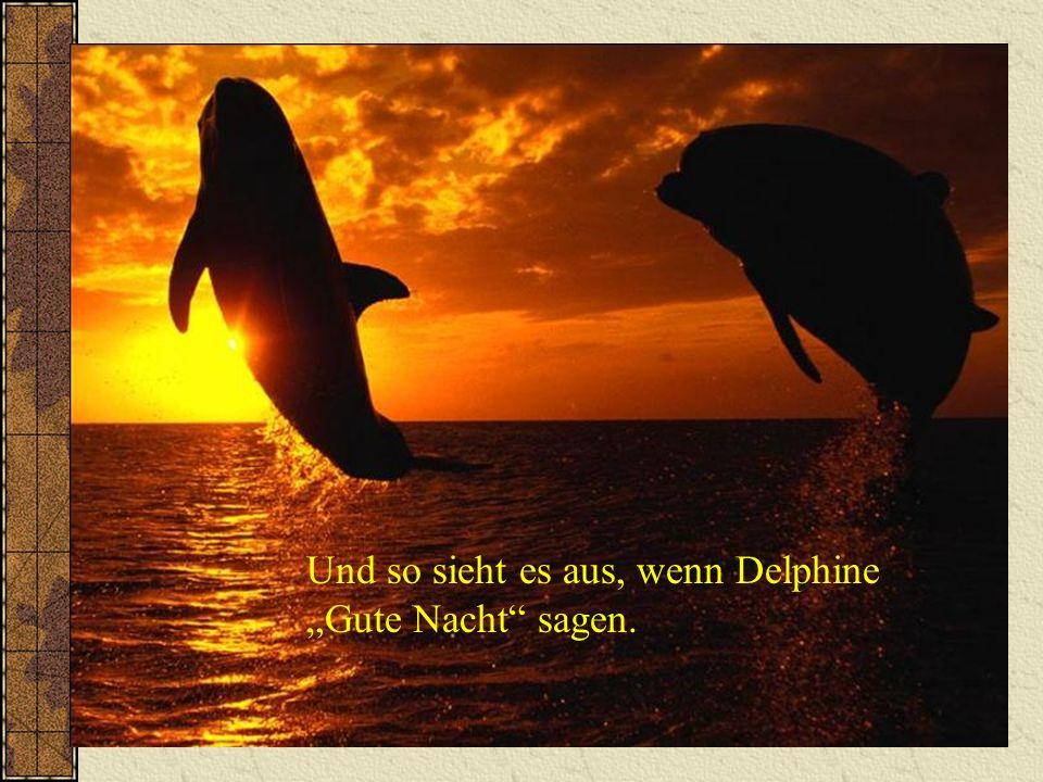 Und so sieht es aus, wenn Delphine Gute Nacht sagen.