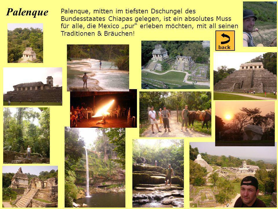 Palenque Palenque, mitten im tiefsten Dschungel des Bundesstaates Chiapas gelegen, ist ein absolutes Muss für alle, die Mexico pur erleben möchten, mit all seinen Traditionen & Bräuchen.