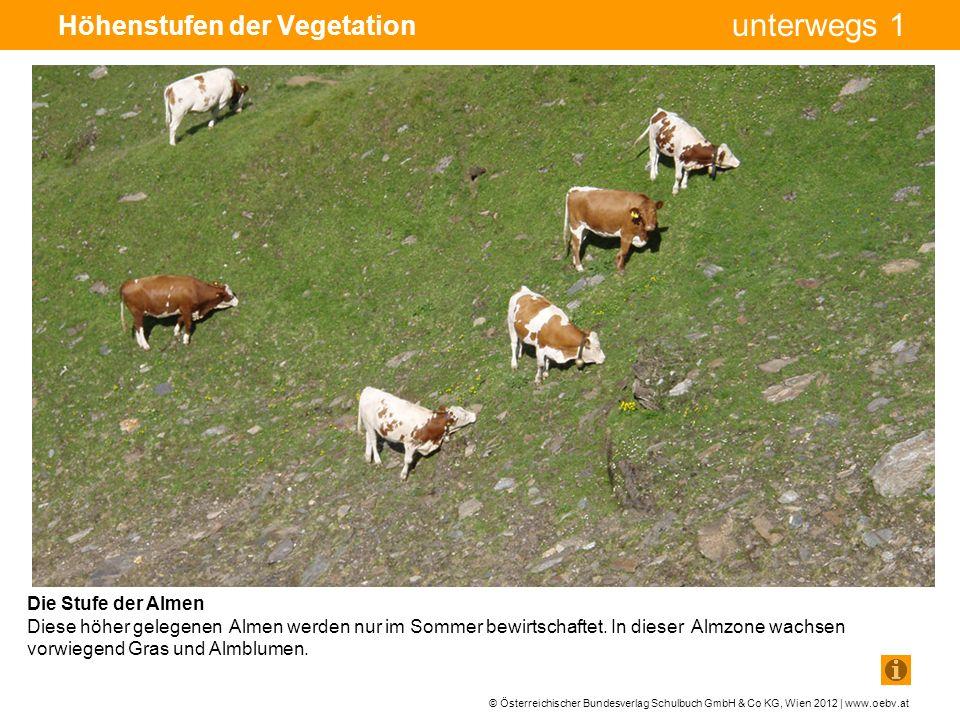 © Österreichischer Bundesverlag Schulbuch GmbH & Co KG, Wien 2012 | www.oebv.at unterwegs 1 Höhenstufen der Vegetation Die Stufe der Almen Diese höher gelegenen Almen werden nur im Sommer bewirtschaftet.
