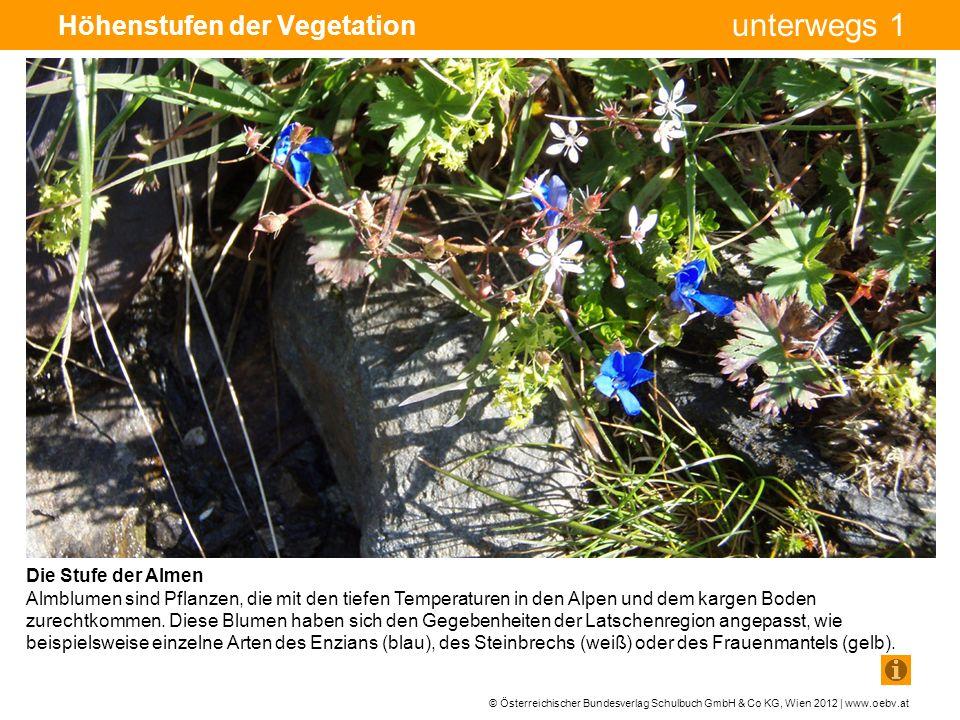 © Österreichischer Bundesverlag Schulbuch GmbH & Co KG, Wien 2012 | www.oebv.at unterwegs 1 Höhenstufen der Vegetation Die Stufe der Almen Almblumen sind Pflanzen, die mit den tiefen Temperaturen in den Alpen und dem kargen Boden zurechtkommen.