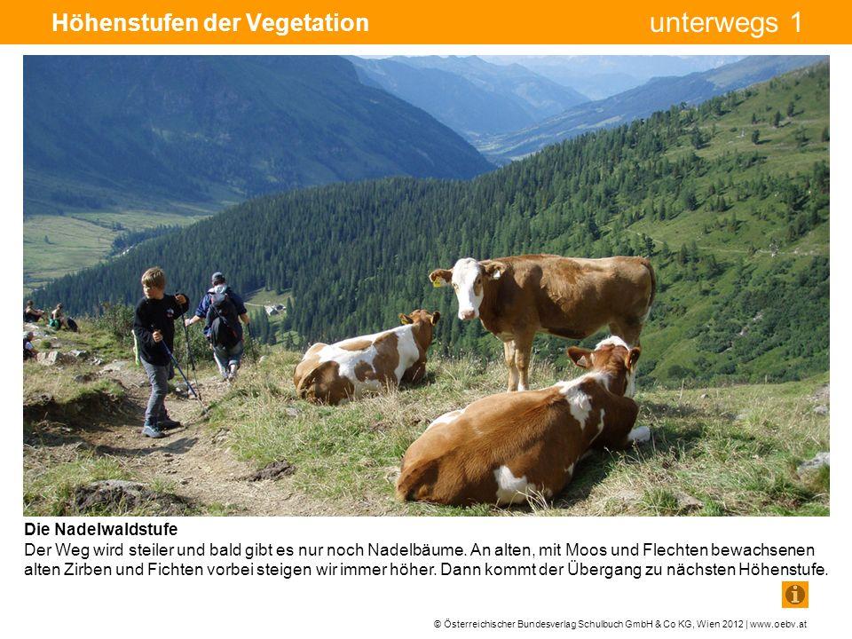 © Österreichischer Bundesverlag Schulbuch GmbH & Co KG, Wien 2012 | www.oebv.at unterwegs 1 Höhenstufen der Vegetation Die Nadelwaldstufe Der Weg wird steiler und bald gibt es nur noch Nadelbäume.