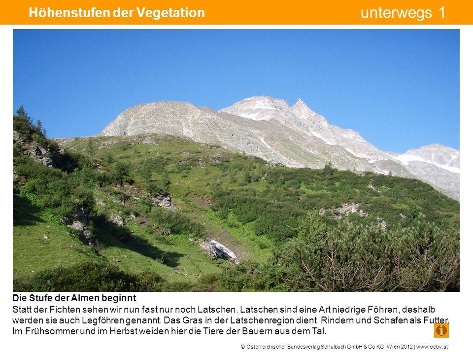 © Österreichischer Bundesverlag Schulbuch GmbH & Co KG, Wien 2012 | www.oebv.at unterwegs 1 Höhenstufen der Vegetation Die Stufe der Almen beginnt Statt der Fichten sehen wir nun fast nur noch Latschen.