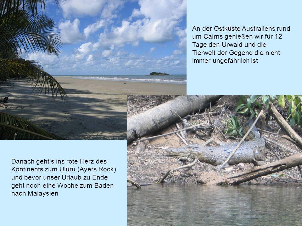 An der Ostküste Australiens rund um Cairns genießen wir für 12 Tage den Urwald und die Tierwelt der Gegend die nicht immer ungefährlich ist Danach gehts ins rote Herz des Kontinents zum Uluru (Ayers Rock) und bevor unser Urlaub zu Ende geht noch eine Woche zum Baden nach Malaysien