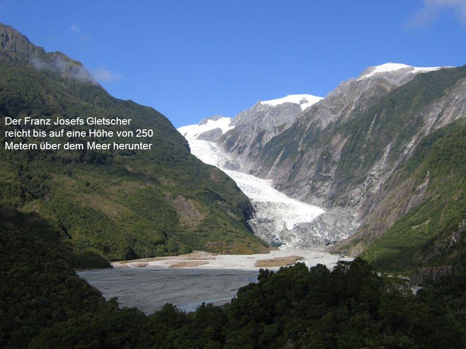 Der Franz Josefs Gletscher reicht bis auf eine Höhe von 250 Metern über dem Meer herunter
