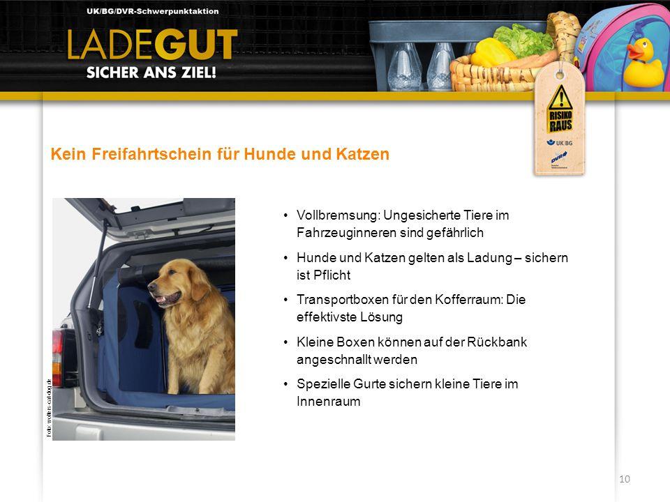 10 Kein Freifahrtschein für Hunde und Katzen Vollbremsung: Ungesicherte Tiere im Fahrzeuginneren sind gefährlich Hunde und Katzen gelten als Ladung –
