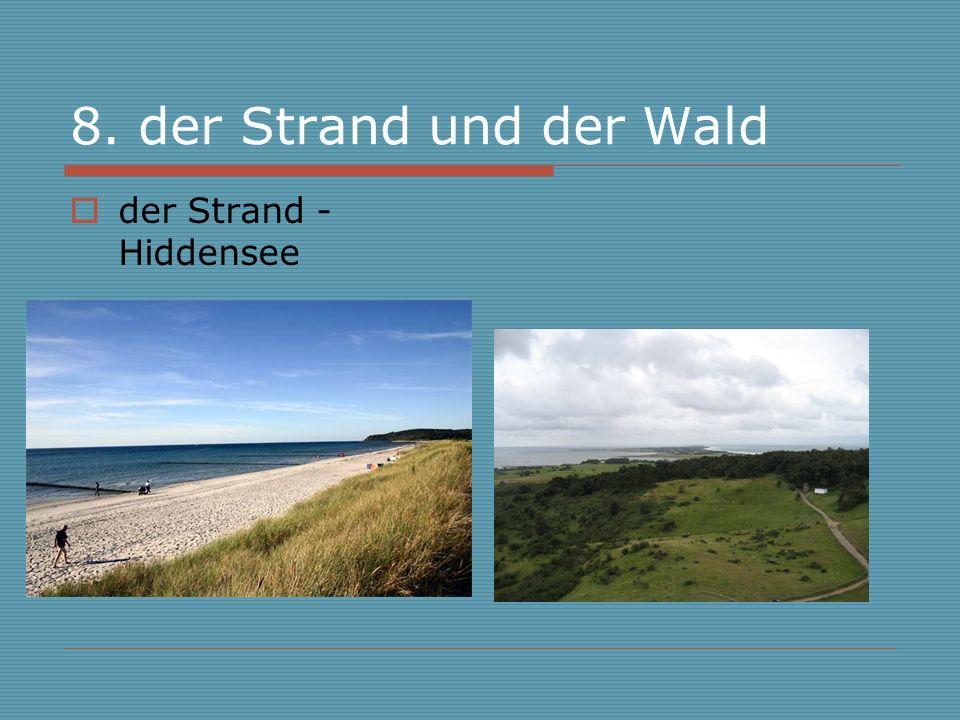 8. der Strand und der Wald der Strand - Hiddensee