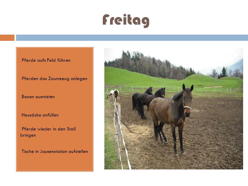 Freitag Pferde aufs Feld führen Pferden das Zaumzeug anlegen Boxen ausmisten Heusäcke anfüllen Pferde wieder in den Stall bringen Tische in Jausenstat