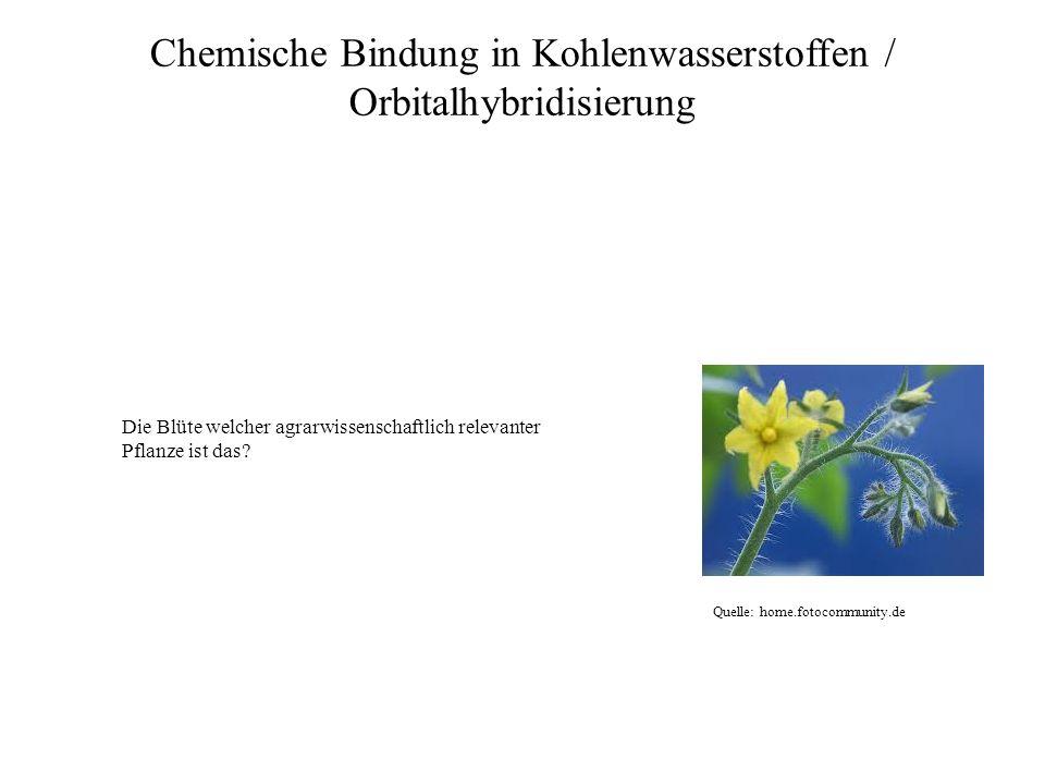 Quelle: home.fotocommunity.de Chemische Bindung in Kohlenwasserstoffen / Orbitalhybridisierung Die Blüte welcher agrarwissenschaftlich relevanter Pfla