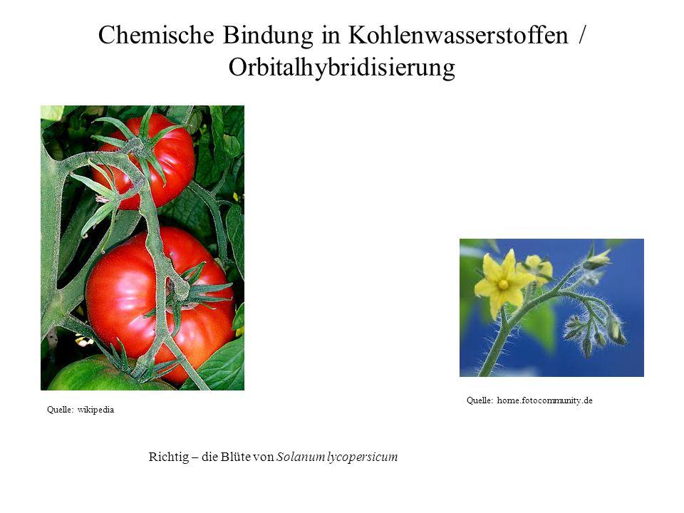Quelle: home.fotocommunity.de Quelle: wikipedia Chemische Bindung in Kohlenwasserstoffen / Orbitalhybridisierung Richtig – die Blüte von Solanum lycop