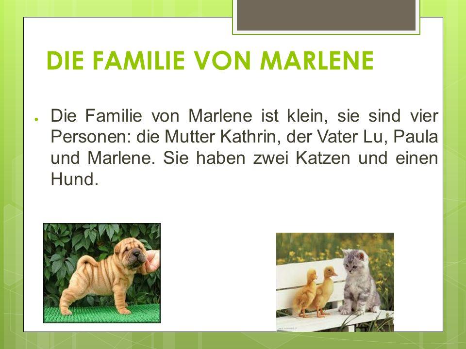 DIE FAMILIE VON MARLENE Die Familie von Marlene ist klein, sie sind vier Personen: die Mutter Kathrin, der Vater Lu, Paula und Marlene.