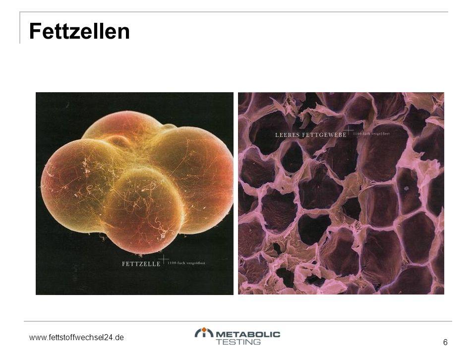 www.fettstoffwechsel24.de Fettzellen 6